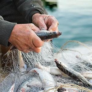 Pescas e Agrícola